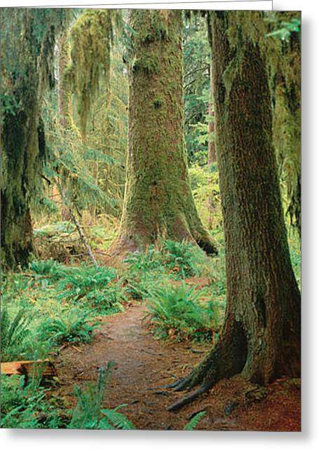 Panoramics Greeting Cards - Olympic National Forest, Washington Greeting Card by Panoramic Images