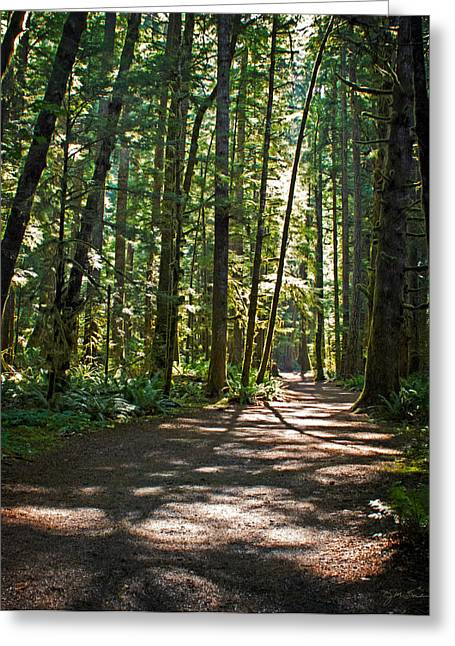 Dappled Light Greeting Cards - Olympic National Park Forest Path Greeting Card by Julie Magers Soulen