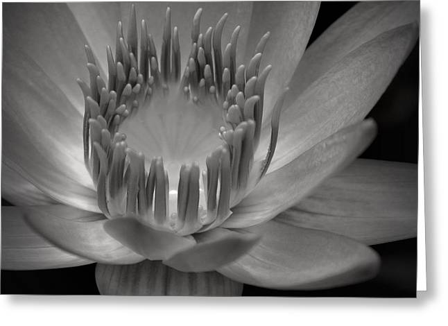 Om Mani Padme Hum Hail To The Jewel In The Lotus Greeting Card by Sharon Mau