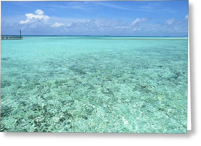 Maldivian Greeting Cards - OM-MMMMMmmmm Greeting Card by Jenny Rainbow