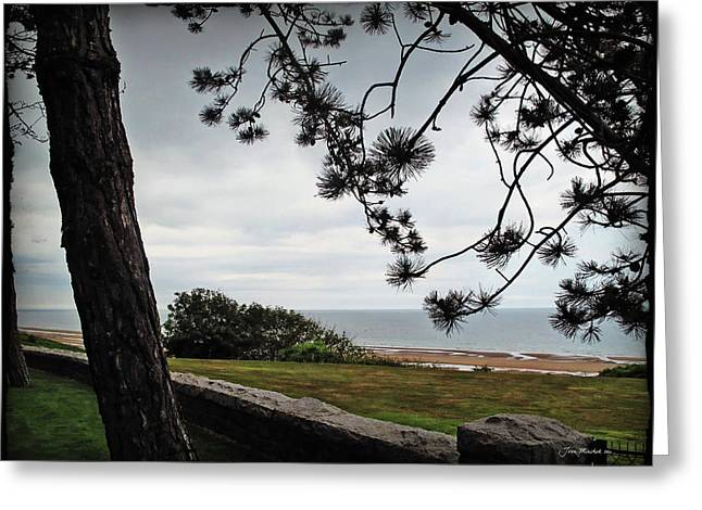 Minchak Greeting Cards - Omaha Beach under Trees Greeting Card by Joan  Minchak