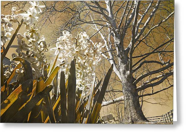 Sycamore Greeting Cards - Ominous Greeting Card by Betsy C  Knapp
