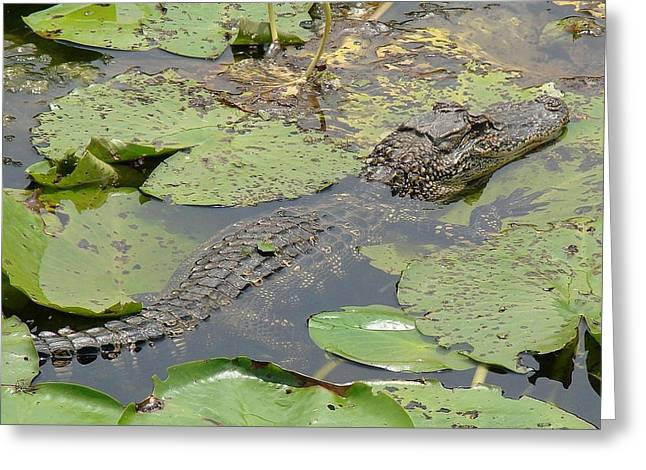 Lilly Pad Greeting Cards - On a Break Greeting Card by Brenda Romero