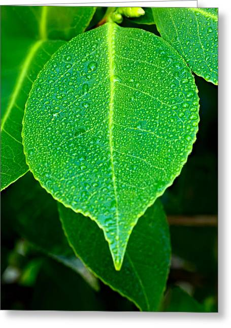 Green Foliage Greeting Cards - On a Limb Greeting Card by Mark Lucey
