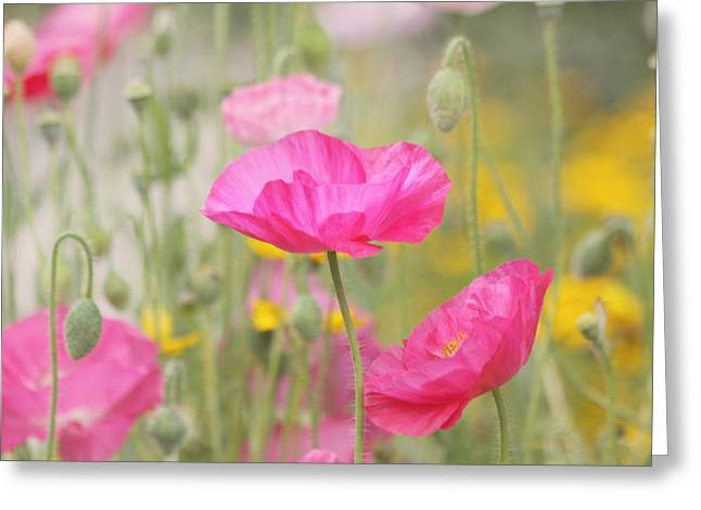 Poppy Decorations Greeting Cards - On A Summer Day - Pink Poppy Greeting Card by Kim Hojnacki