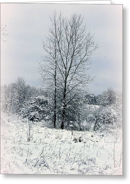 Winter Solstice Greeting Cards Greeting Cards - On A Winters Day Greeting Card by Kay Novy