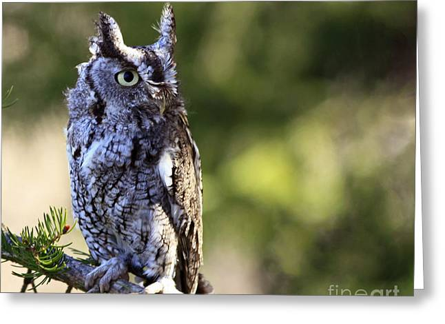 Shelley Myke Greeting Cards - On Alert Majestic Eastern Screech Owl  Greeting Card by Inspired Nature Photography By Shelley Myke
