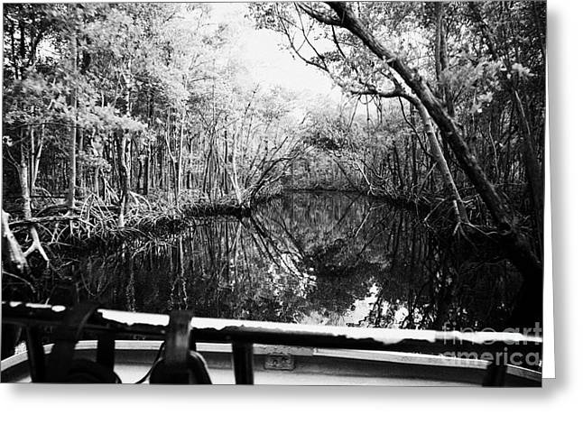 on board an airboat ride through a mangrove jungle in everglades city florida everglades usa  Greeting Card by Joe Fox