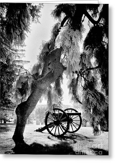 Civil War .tree Greeting Cards - On Display Greeting Card by Paul W Faust -  Impressions of Light