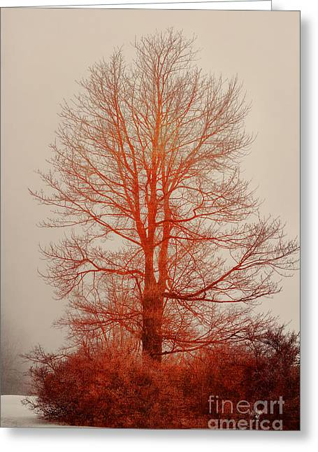 Foggy Day Greeting Cards - On Fire In The Fog Greeting Card by Lois Bryan