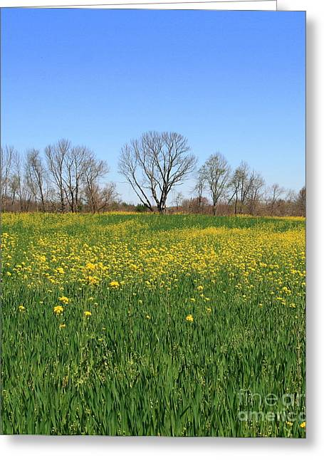 Blossom Greeting Cards - On Golden Field Greeting Card by Neal  Eslinger