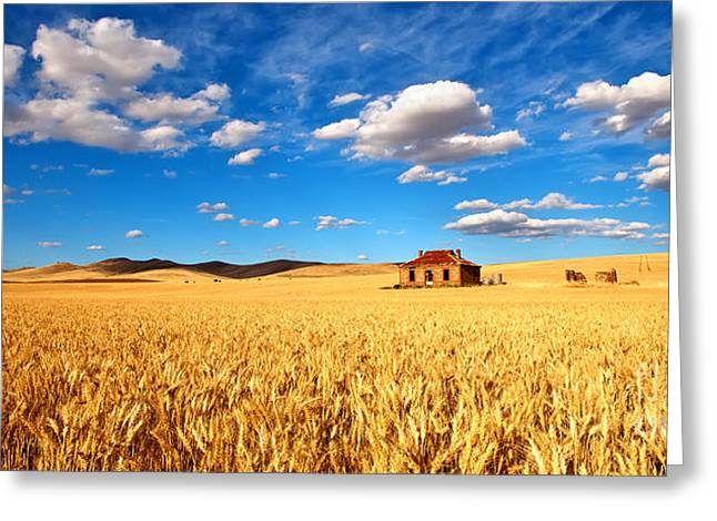 Farm Greeting Cards - On Golden Fields Greeting Card by Bill  Robinson