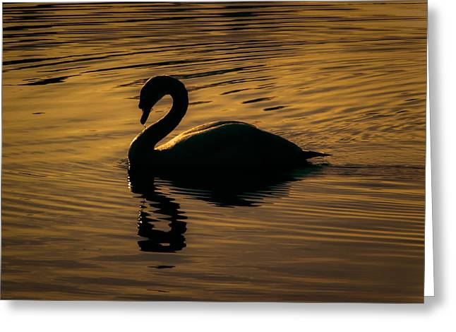 Golden Pond Greeting Cards - On golden pond Greeting Card by Chris Fletcher