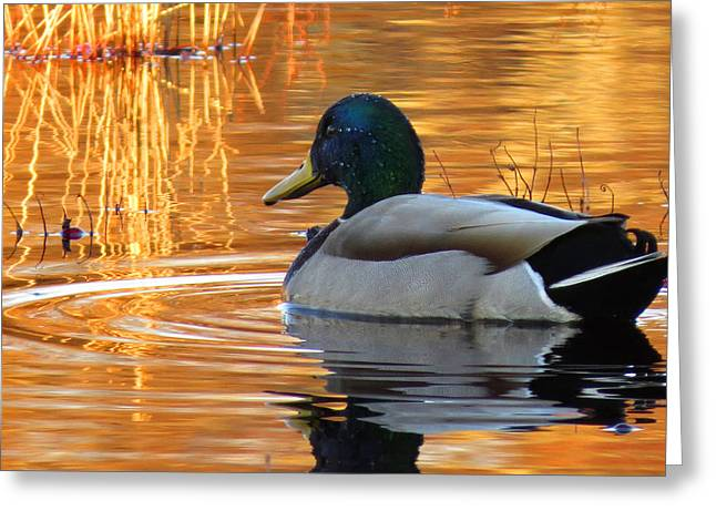 East Dennis Ma Greeting Cards - On Golden Pond Greeting Card by Dianne Cowen