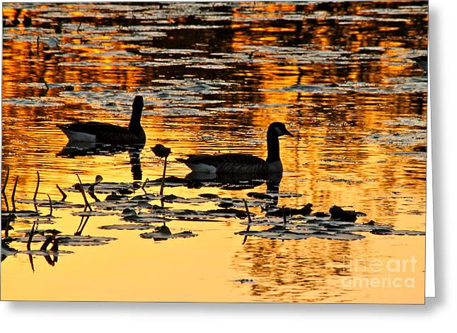 Water Lilly Greeting Cards - On Golden Pond Greeting Card by Jay Nodianos