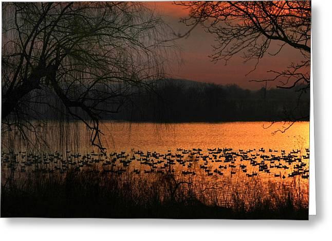 On Golden Pond Greeting Card by Lori Deiter