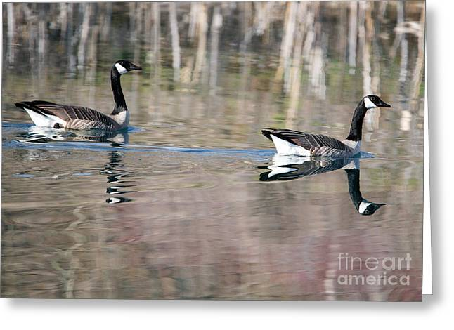 On Golden Pond Greeting Card by Mike Dawson