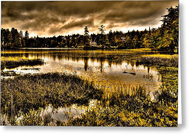 Fir Trees Greeting Cards - On Golden Pond - Raquette Lake in the Adirondack Mountains of New York Greeting Card by David Patterson