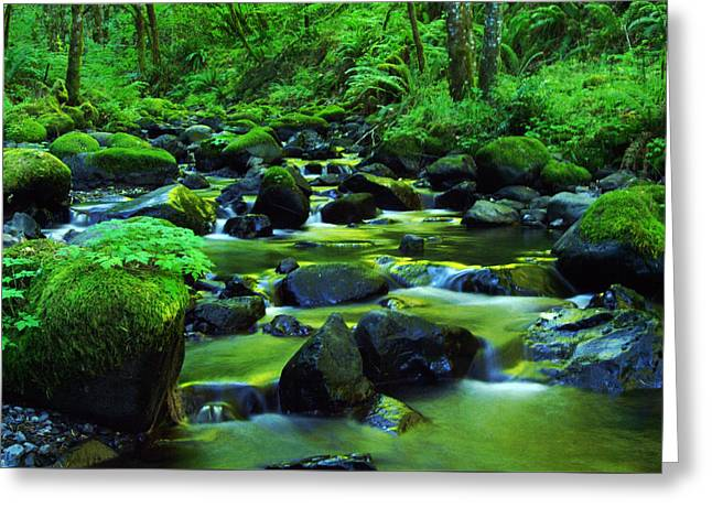 On Golden Waters  Greeting Card by Jeff Swan