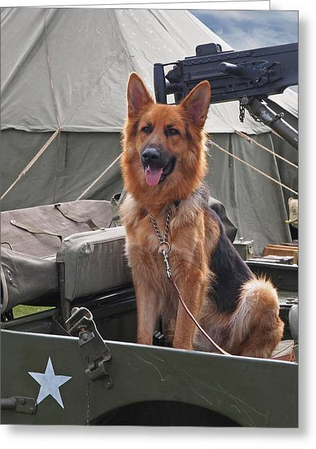 Guard Dog Greeting Cards - On Guard Duty Greeting Card by Gill Billington
