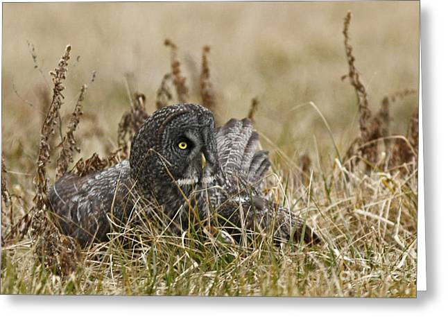 On Guard Greeting Card by Inspired Nature Photography Fine Art Photography