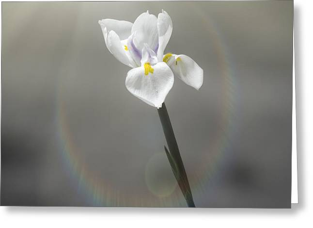 Cape Lily Greeting Cards - On My Own Greeting Card by Carolyn Marshall