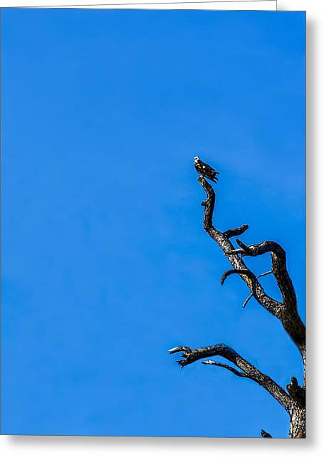 Dead Tree Greeting Cards - On Point Greeting Card by Marvin Spates