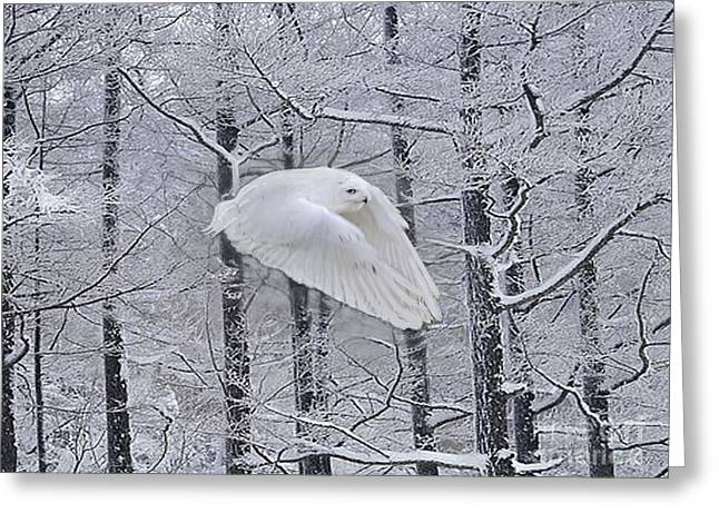 Snowstorm Posters Greeting Cards - On Praying Wings Greeting Card by Maureen Tillman