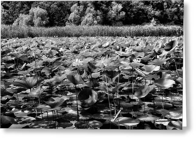Ground Level Greeting Cards - On Still Pond Greeting Card by Mountain Dreams