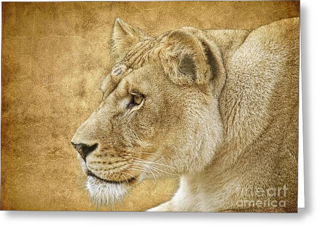 Lioness Greeting Cards - On Target Greeting Card by Steve McKinzie