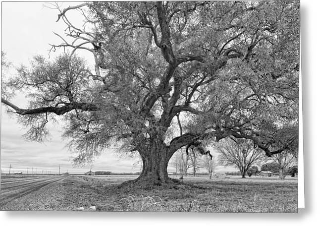 Grey Clouds Greeting Cards - On the Delta monochrome Greeting Card by Steve Harrington