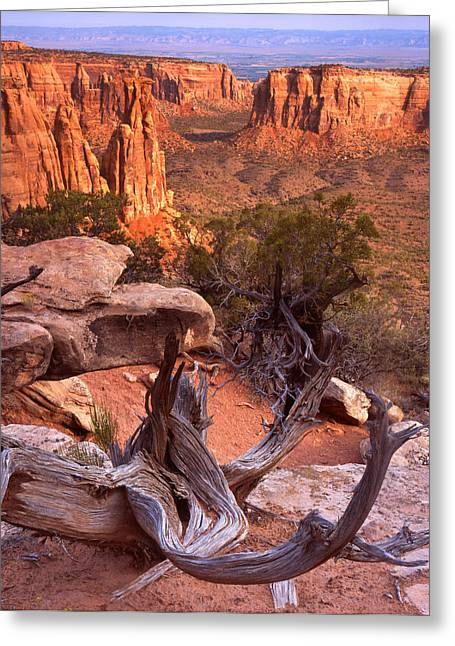 On The Edge Greeting Card by Ray Mathis