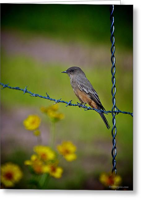 Flowers On A Fence Greeting Cards - Says Phoebe Greeting Card by Britt Runyon