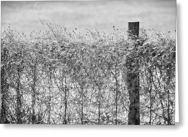 Vine Leaves Greeting Cards - On The Fence BW Greeting Card by Carolyn Marshall