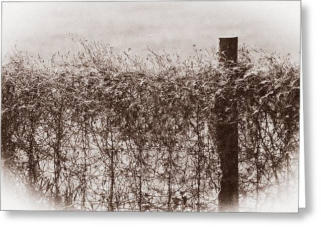 Vine Leaves Greeting Cards - On The Fence Greeting Card by Carolyn Marshall