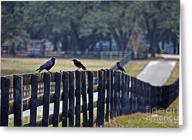 Gathering Greeting Cards - On the Fence - Florida Greeting Card by Mary Machare