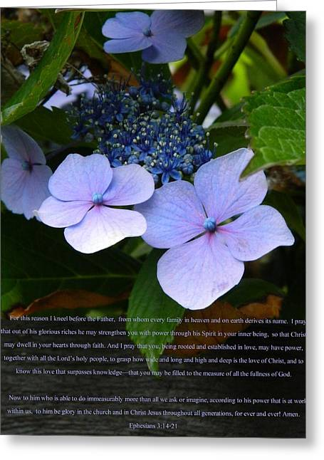 3.14 Greeting Cards - On the Fence Hydrangea Eph 3 14 21 Greeting Card by Nicki Bennett