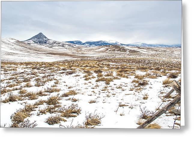 Daysray Photography Greeting Cards - On the Fence Line Greeting Card by Fran Riley