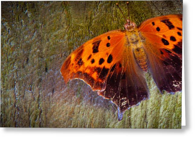 Empowerment Greeting Cards - On the Fence Metamorphosis Greeting Card by Brenna Schelle