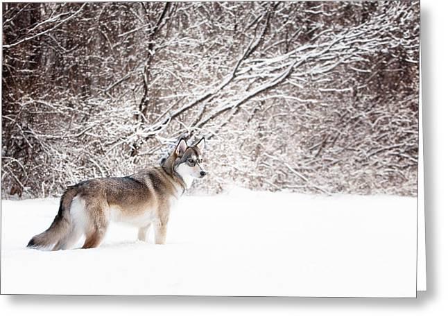 On The Hunt Greeting Card by Karen Zucal Varnas