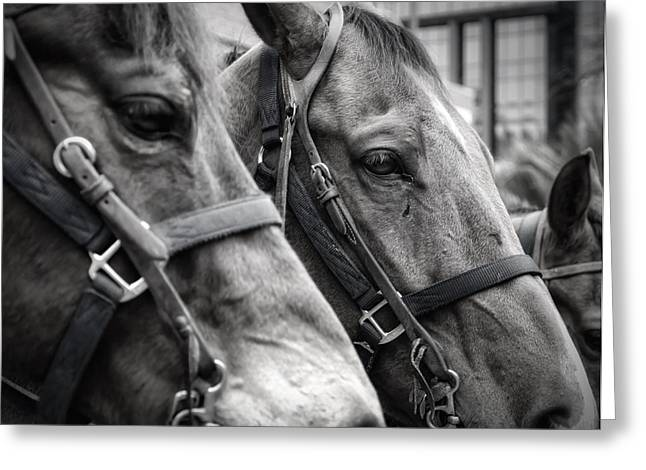 Breeds Greeting Cards - On the Job Greeting Card by Joan Carroll