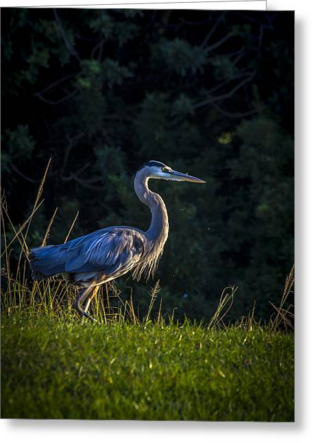Nesting Greeting Cards - On The March Greeting Card by Marvin Spates