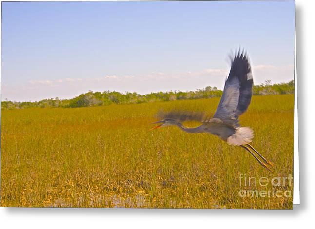 Wild Birds Greeting Cards - On the Move Greeting Card by Judy Kay