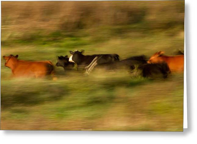 On The Move Greeting Card by Nathaniel Kidd