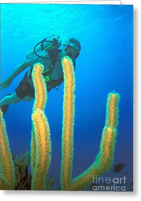 Scuba Diving Greeting Cards - On the Paradise Reef Greeting Card by Jerry McElroy