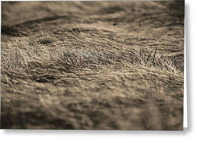 Ground Level Photographs Greeting Cards - On The Plains Greeting Card by Dan Sproul
