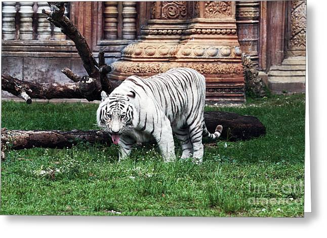 The Tiger Greeting Cards - On the Prowl Greeting Card by John Rizzuto