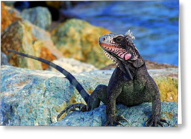 Textured Photograph Greeting Cards - ON the PROWL Greeting Card by Karen Wiles