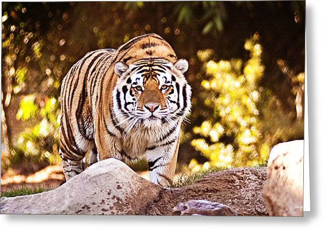Mike The Tiger Greeting Cards - On the Prowl Greeting Card by Scott Pellegrin