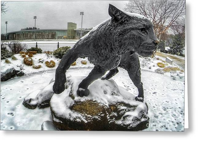 Wildcats Greeting Cards - On the Prowl Greeting Card by Scott Thorp